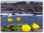 Click for more information on Mendocino Coast Botanical Garden Shop.