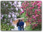 Click for more information on MAY 5-6 | Rhododendrons Walks.