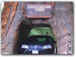Click for more information on CHANDELIER ~ DRIVE THRU TREE.