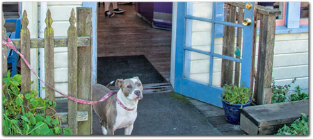 Click for more information on Frankie\'s has a pet friendly deck.