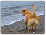 Click for more information on Noyo Beach - Off Leash Beach.