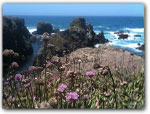 Click for more information on Pomo Bluffs in Fort Bragg.