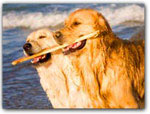 PET FRIENDLY HOTELS & COTTAGES
