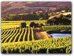 MENDOCINO's WINE COUNTRY